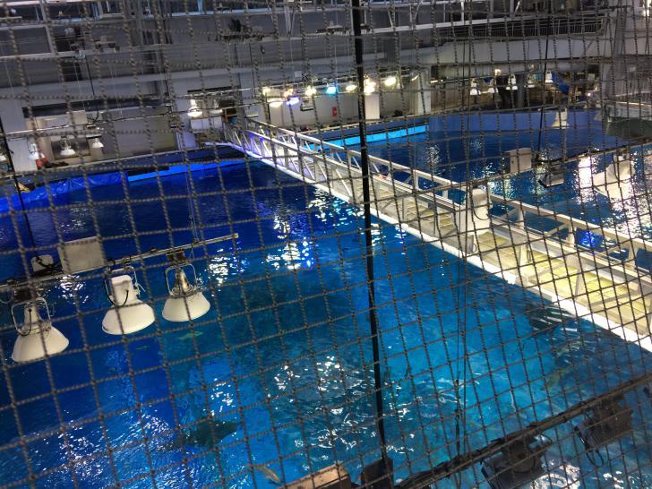 美ら海水族館・バックヤード-607