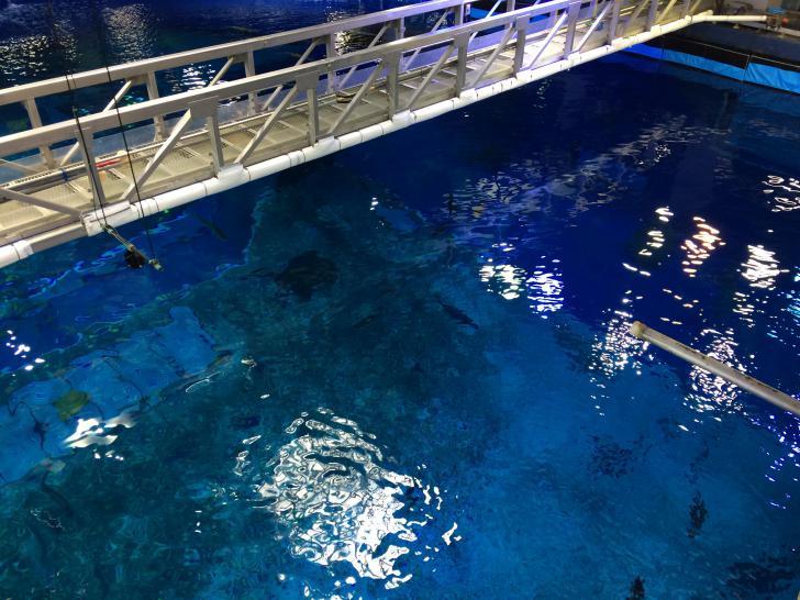 美ら海水族館・バックヤード-608