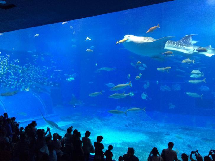 美ら海水族館・バックヤード-610
