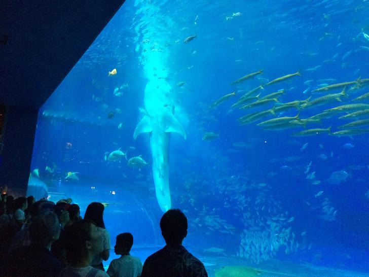 美ら海水族館・バックヤード-611